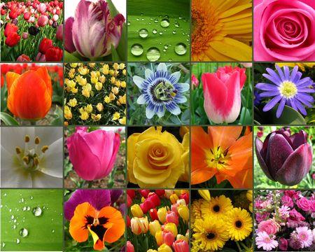 singular: flower collage Stock Photo