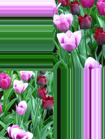 Greeting card, flowers photo