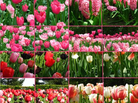 Pink tulip collage greeting card photo