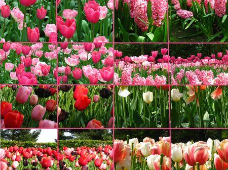 ecard: Pink tulip collage greeting card Stock Photo