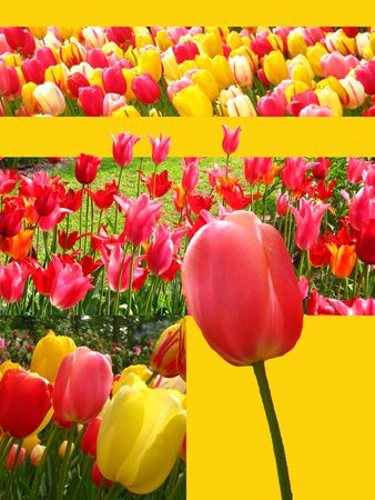 tulip collage greeting card photo