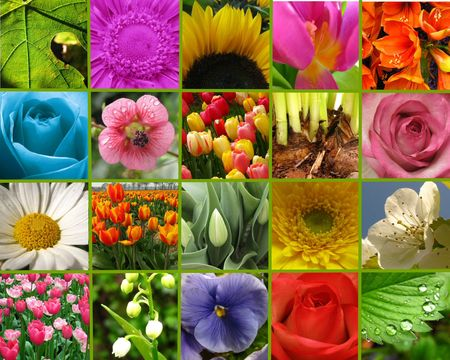 flower collage greeting card Stock Photo - 4815878