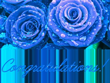 fine print: blue roses congratulations card Stock Photo