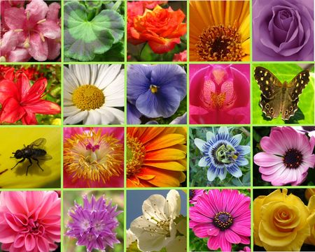 Floral collage greeting card Stock Photo - 4901420