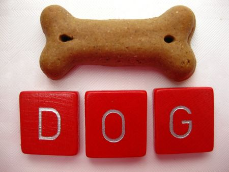 chew over: dog biscuit
