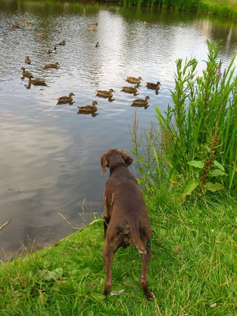 looking for ducks photo