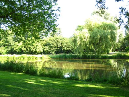 pond in the park photo