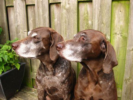 rifrug: Dogs