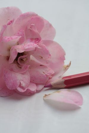 drawing a rose photo