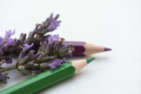 Drawing lavender Stock Photo - 5256304
