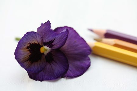 drawing a pansy Stock Photo - 5274194