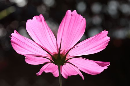 the other side: the other side of a cosmos Stock Photo