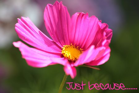 ecard: Just because greeting card Pink flower - Print and post