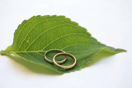 wedding bands: Alianzas de boda en una hoja verde