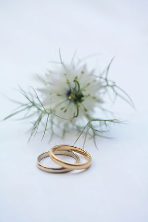 Pair of wedding rings and a white love in the mist photo
