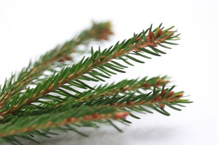 branche sapin noel: Christmas Tree Branch Banque d'images