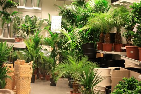 Green big plants and accessoiries in a garden center Stock Photo - 5568275