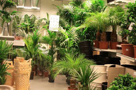 garden center: Green big plants and accessoiries in a garden center