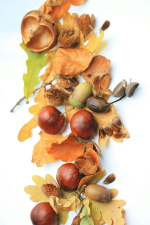 Autumn symbols, leaves, chestnuts and acorns, perfect as a border or background Stock Photo