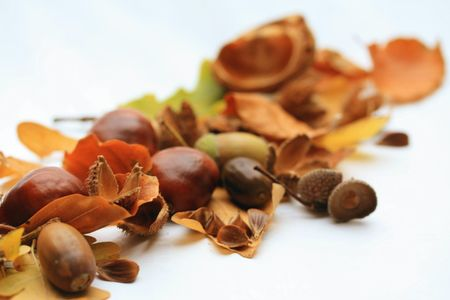 Autumn still life with leaves, acorns and chestnuts Stock Photo - 5602546