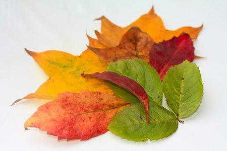 thanksgiving greeting: Autumn leaves thanksgiving greeting Stock Photo