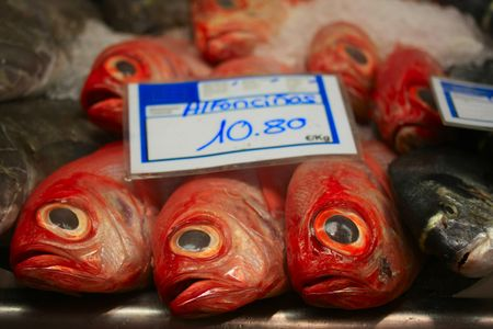 Fresh fish on a fish market in Spain photo