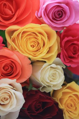 A bouquet of mixed roses in yellow, pink, white and orange