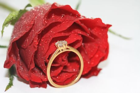A diamond solutaire engagement ring in yellow gold in front of a red rose, covered with waterdrops, the tears of a bride photo