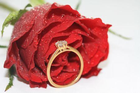 Ein Diamant Solutaire-Verlobungsring in gelb Gold vor der eine rote rose, bedeckt mit Wassertropfen, die Tränen des eine Braut Standard-Bild - 6167118
