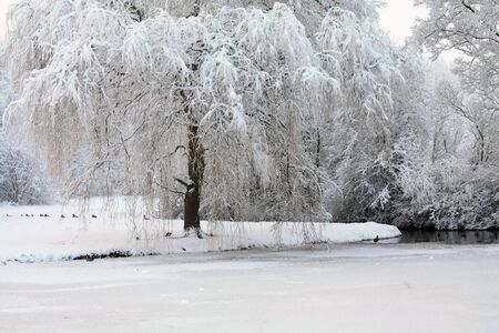 A winter forest with frozen trees and an icy pond with ducks photo