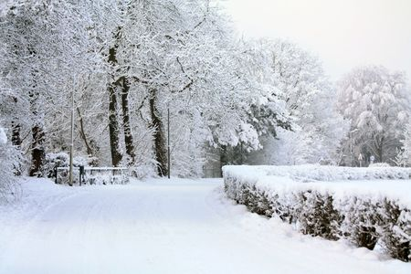 the trees covered with snow: A windy road covered with snow and frozen trees in the background
