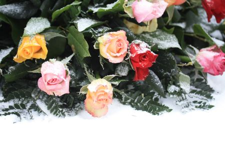A mixed rose bouquet in the snow, yellow, pink and red Stock Photo - 6230082