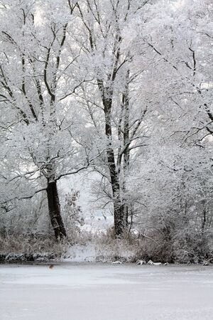 Frozen trees and ducks in a pond in a winter wonderland photo
