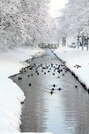 A group of ducks and other birds in a frozen ditch, small bridge in the background photo