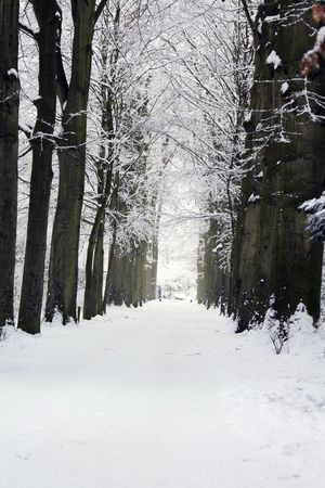 A straight forest lane in the winter photo