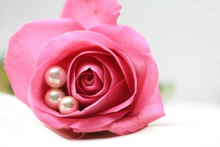 three white pearls in a pink rose