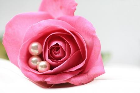perle rose: trois perles blancs dans une rose rose  Banque d'images