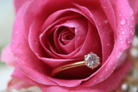 A diamond engagement ring in a rose with the tears of a bride Stock Photo