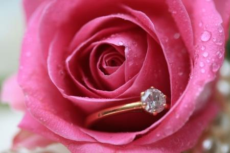 ring engagement: Un anillo de compromiso de diamantes en una rosa con las l�grimas de una novia