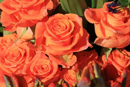 flower parade: A bouquet of orange roses in a flower parade Stock Photo