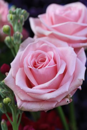Big pink roses as part of a flower arrangement in close up Stock Photo