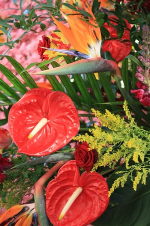 red anthurium and bird of paradise in an arrangement photo