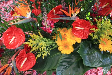 Bird of paradise and red anthurium in an exotic floral arrangement