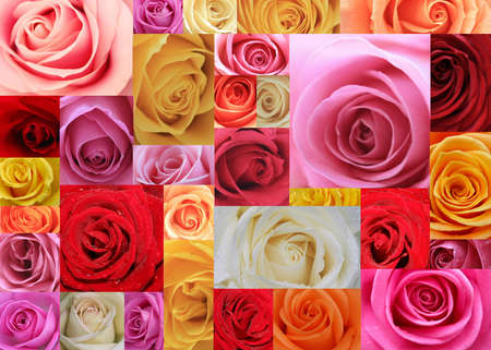 An XXL collage made of 31 imacro images of roses
