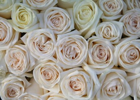 A flower arrangement with soft pink and white roses