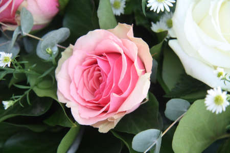 A single solitair pink rose and some green leaves