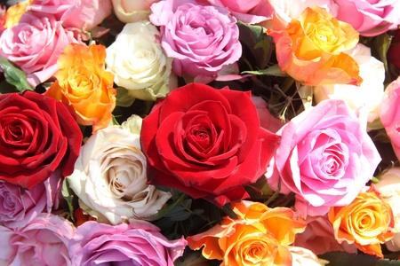 rosas naranjas: Un arreglo floral de rosas naranjas, blancos, rosados y rojos grandes en la luz del sol Foto de archivo