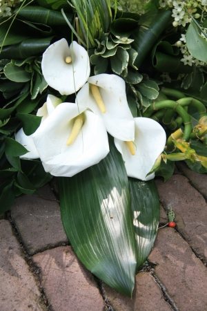 Weiß und grün arum Sympathie Blumengesteck auf Bürgersteig