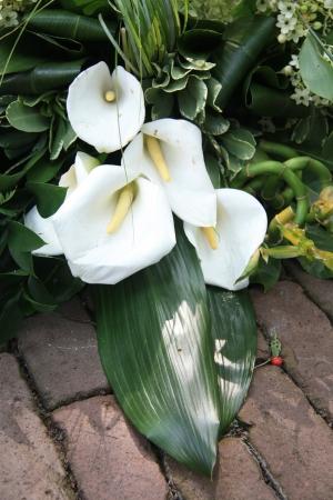 arum: White and green arum sympathy floral arrangement on pavement