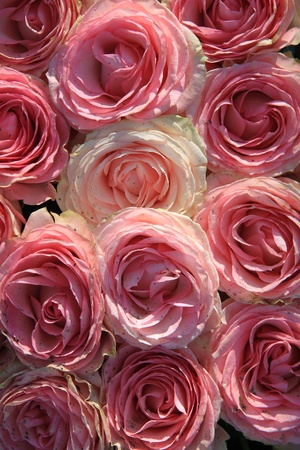 Floral arrangement with big pink roses in the sunlight photo